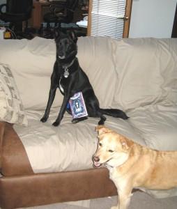 pups & tempest